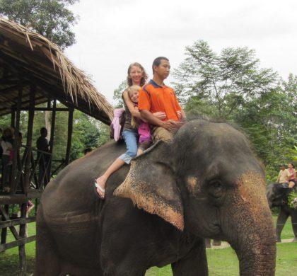 Elephants at Kuala Gandah