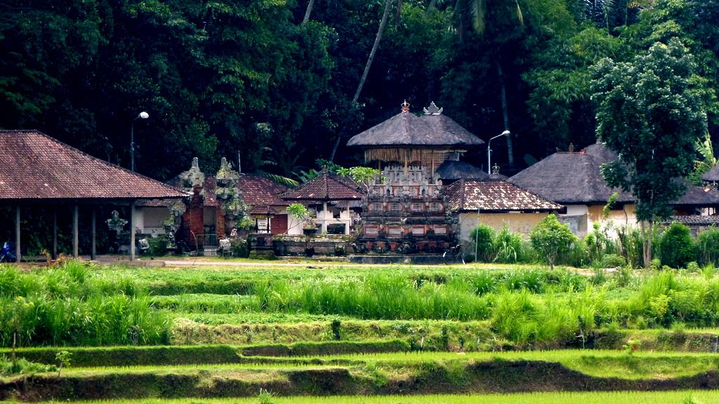 First impressions of Ubud, Bali, Indonesia