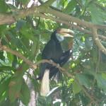 At Bali Zoo