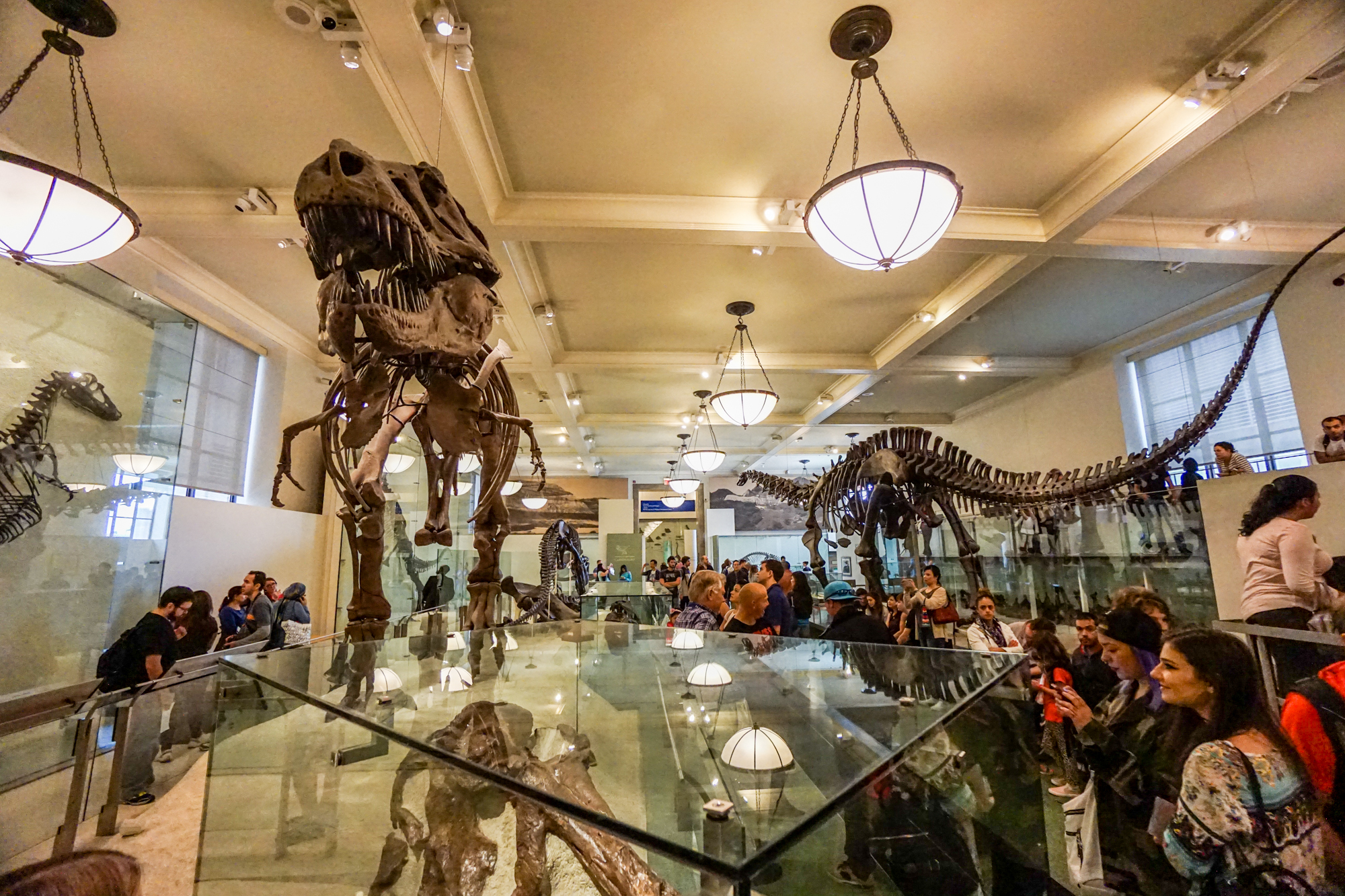 Natural History Museum Nyc Donation Based